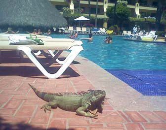 My Trip to Puerto Vallarta:...