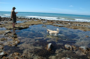 Rocky Point Tidal Pools