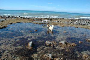 Harry in Tidal Pool Rocky Point